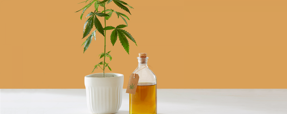 Top 5 Questions to Ask Before You Buy CBD