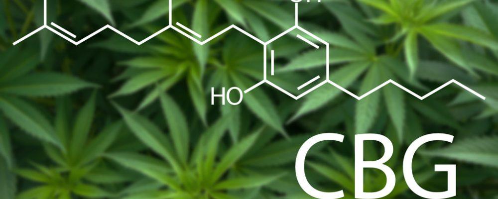 CBG – revolutionary new cannabinoid found in cannabis