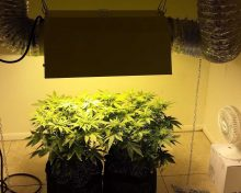 Top Lighting Systems for the Best Marijuana Growth